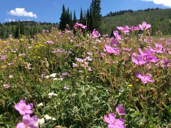 Idaho Ranch Rentals